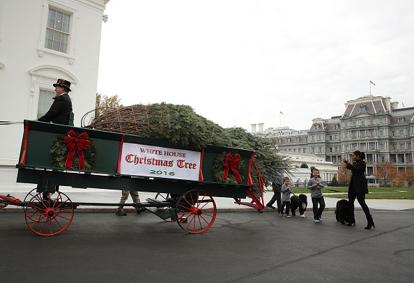 WASHINGTON, DC - NOVEMBER 25: U.S. first lady Michelle Obama, accompanied by her nephews Austin and Aaron Robinson and her dogs Bo and Sunny, receives the official White House Christmas tree at the North Portico of the White House November 25, 2016 in Washington, DC. The tree, a 19 feet tall Balsam fir, arrived at the White House on Friday and will be on display in the Blue Room during the holiday season. (Photo by Alex Wong/Getty Images)